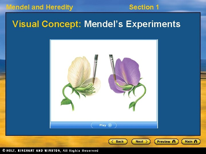 Mendel and Heredity Section 1 Visual Concept: Mendel's Experiments