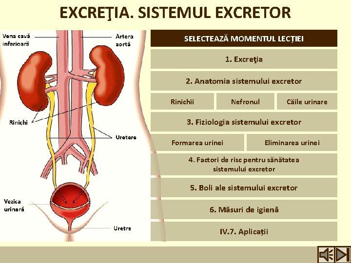 din ce este format sistemul excretor