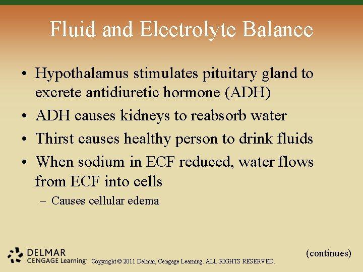 Fluid and Electrolyte Balance • Hypothalamus stimulates pituitary gland to excrete antidiuretic hormone (ADH)