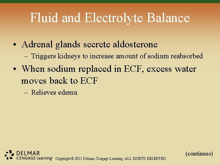 Fluid and Electrolyte Balance • Adrenal glands secrete aldosterone – Triggers kidneys to increase
