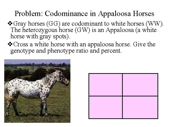Problem: Codominance in Appaloosa Horses v. Gray horses (GG) are codominant to white horses