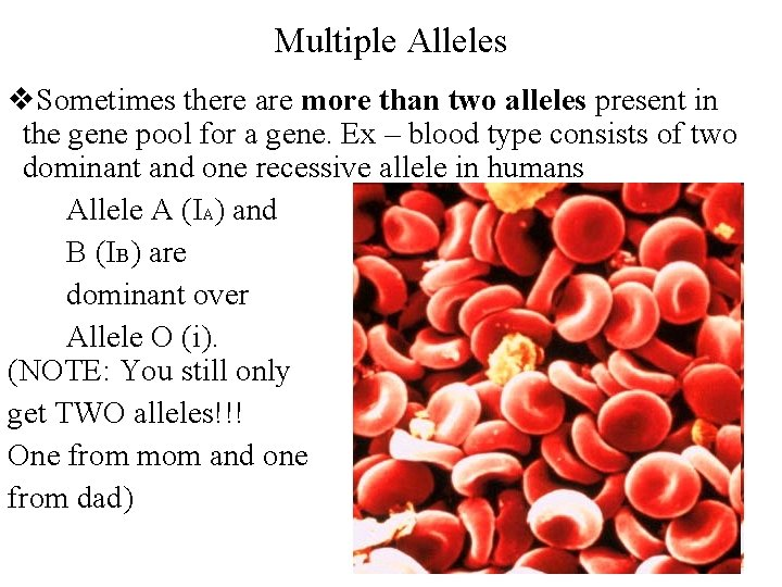 Multiple Alleles v. Sometimes there are more than two alleles present in the gene