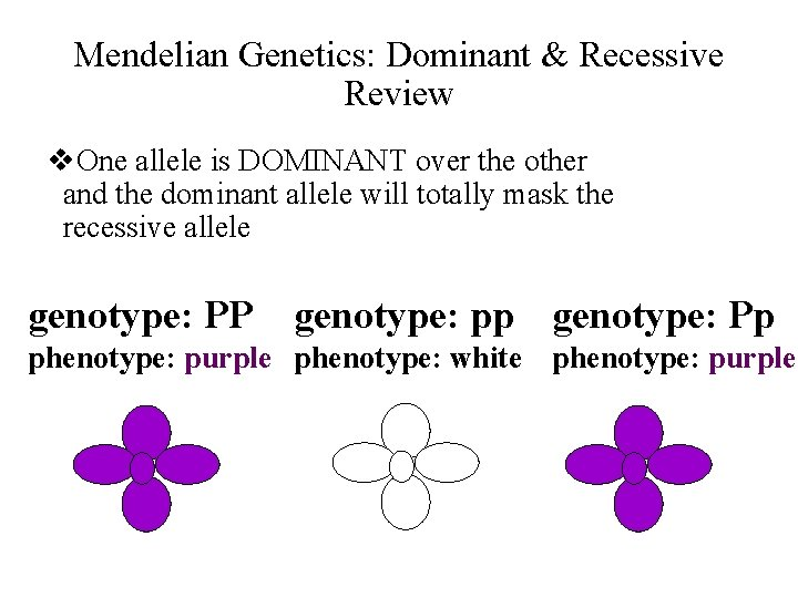 Mendelian Genetics: Dominant & Recessive Review v. One allele is DOMINANT over the other