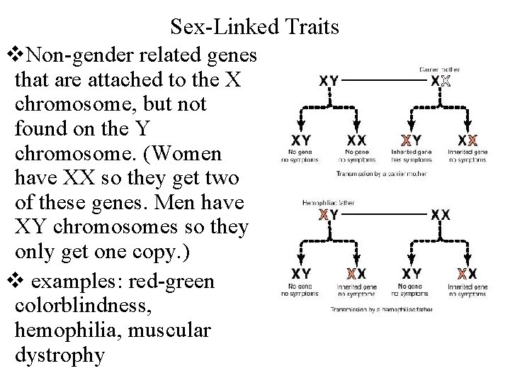 Sex-Linked Traits v. Non-gender related genes that are attached to the X chromosome, but