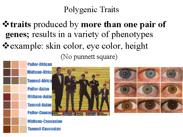 Polygenic Traits vtraits produced by more than one pair of genes; results in a