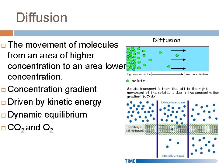 Diffusion The movement of molecules from an area of higher concentration to an area