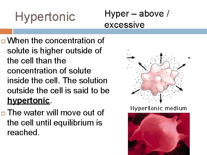 Hypertonic Hyper – above / excessive When the concentration of solute is higher outside