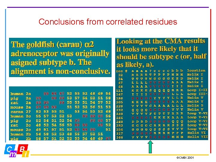 Conclusions from correlated residues ©CMBI 2001
