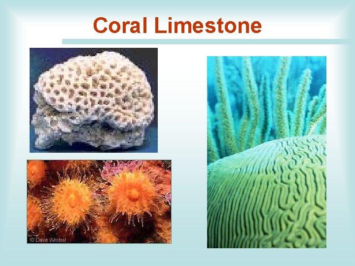 Coral Limestone