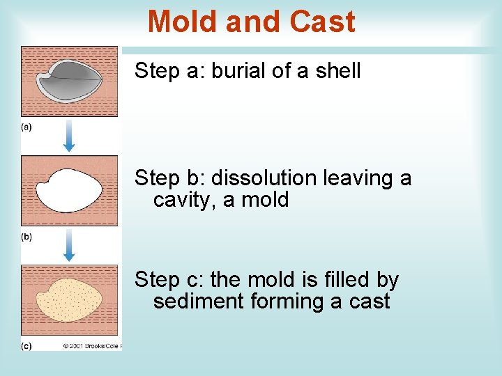 Mold and Cast Step a: burial of a shell Step b: dissolution leaving a