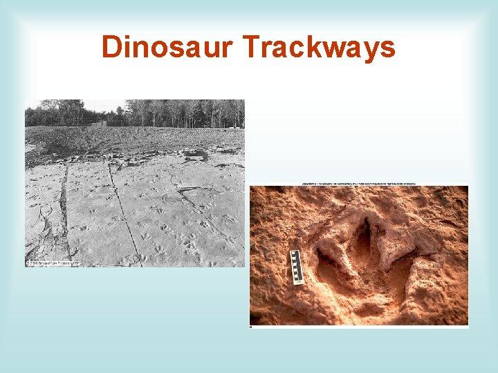 Dinosaur Trackways