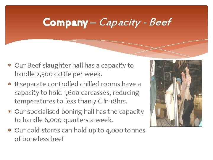 Company – Capacity - Beef Our Beef slaughter hall has a capacity to handle