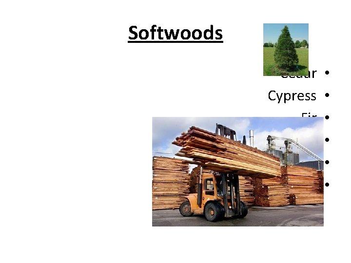 Softwoods Cedar Cypress Fir Pine Redwood Spruce • • •
