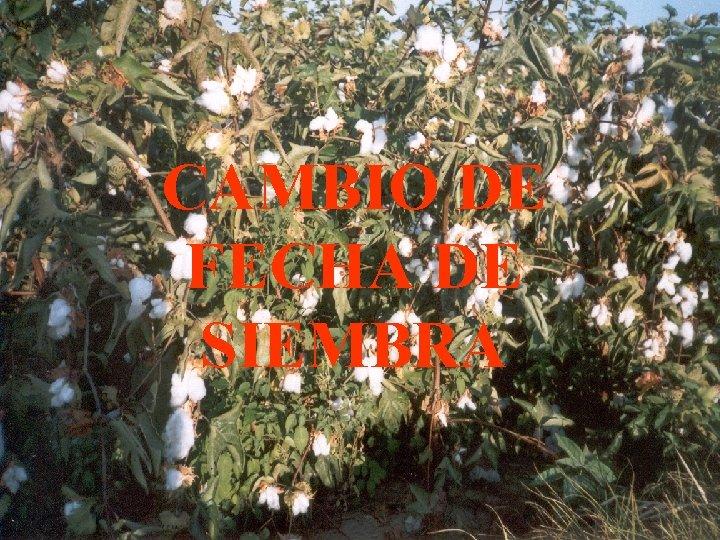 CAMBIO DE FECHA DE SIEMBRA