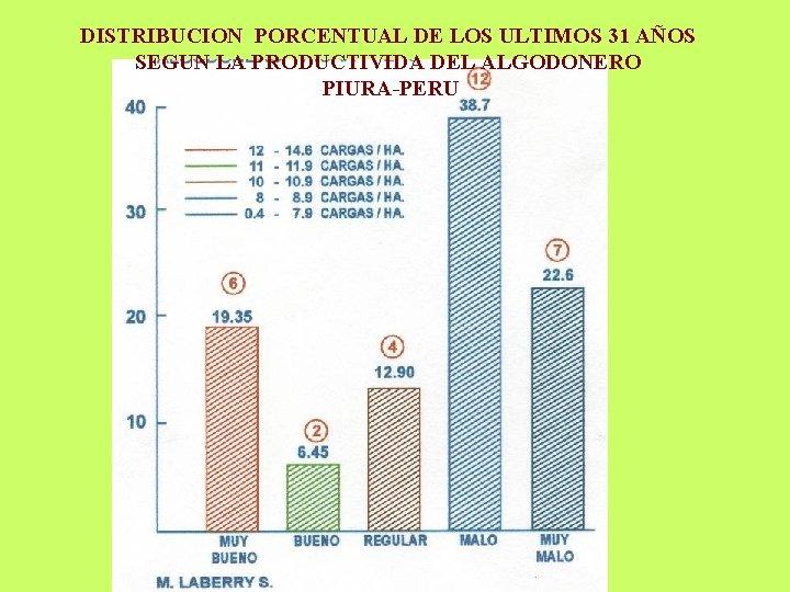 DISTRIBUCION PORCENTUAL DE LOS ULTIMOS 31 AÑOS SEGUN LA PRODUCTIVIDA DEL ALGODONERO PIURA-PERU