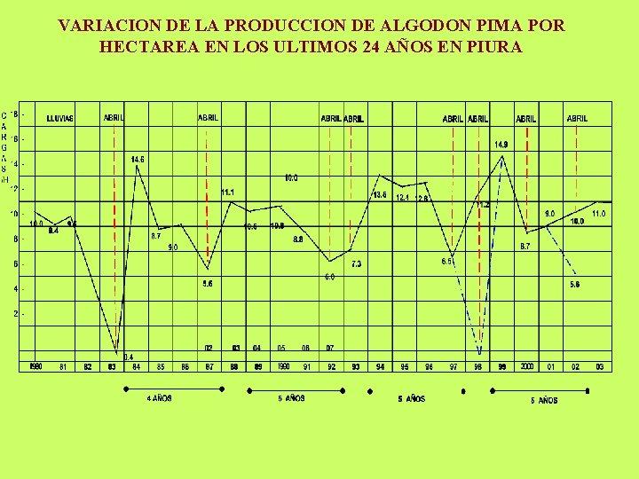 VARIACION DE LA PRODUCCION DE ALGODON PIMA POR HECTAREA EN LOS ULTIMOS 24 AÑOS