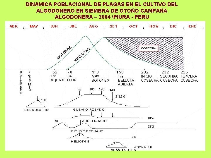 DINAMICA POBLACIONAL DE PLAGAS EN EL CULTIVO DEL ALGODONERO EN SIEMBRA DE OTOÑO CAMPAÑA