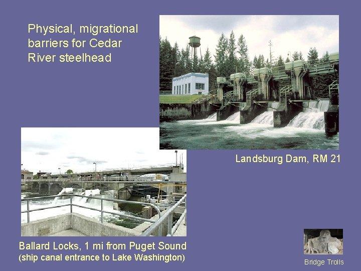 Physical, migrational barriers for Cedar River steelhead Landsburg Dam, RM 21 Ballard Locks, 1
