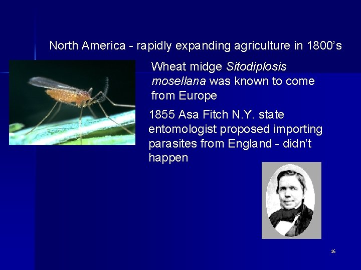 North America - rapidly expanding agriculture in 1800's Wheat midge Sitodiplosis mosellana was known
