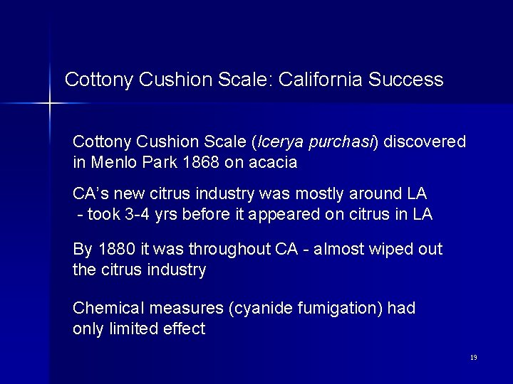 Cottony Cushion Scale: California Success Cottony Cushion Scale (Icerya purchasi) discovered in Menlo Park