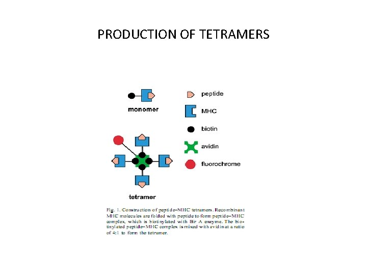 PRODUCTION OF TETRAMERS