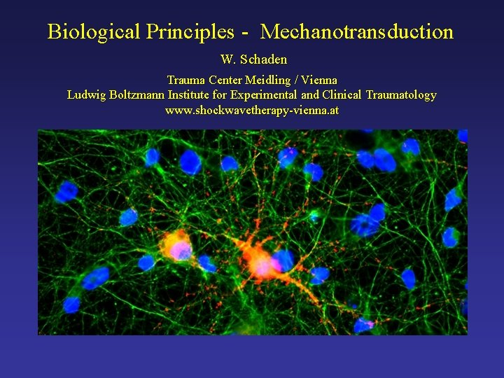 Biological Principles - Mechanotransduction W. Schaden Trauma Center Meidling / Vienna Ludwig Boltzmann Institute