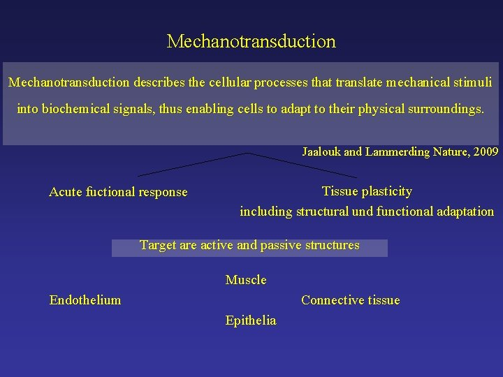 Mechanotransduction describes the cellular processes that translate mechanical stimuli into biochemical signals, thus enabling