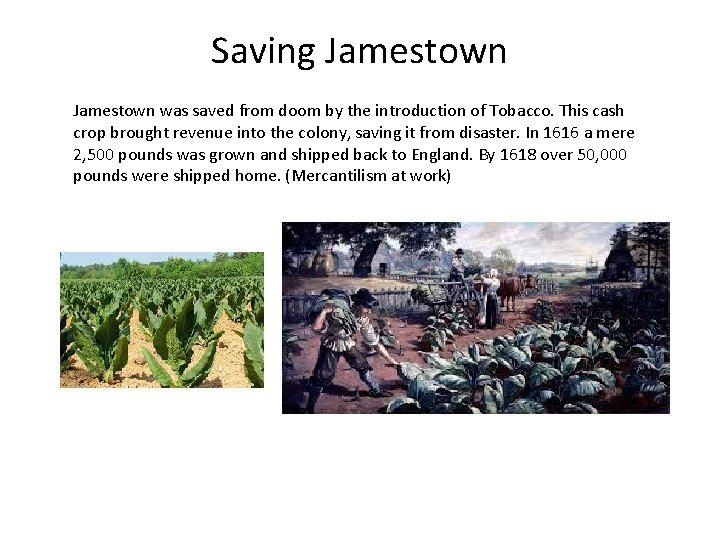 Saving Jamestown was saved from doom by the introduction of Tobacco. This cash crop
