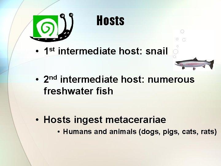 Hosts • 1 st intermediate host: snail • 2 nd intermediate host: numerous freshwater