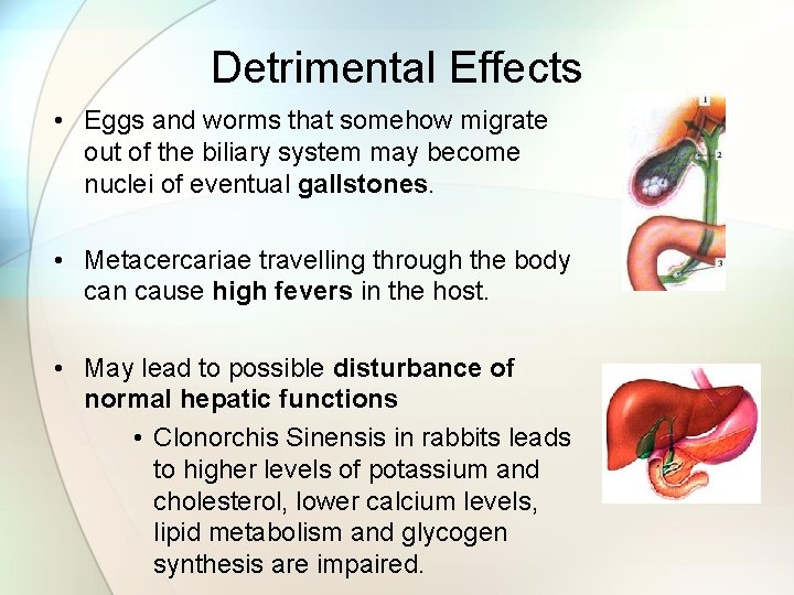 Detrimental Effects • Eggs and worms that somehow migrate out of the biliary system