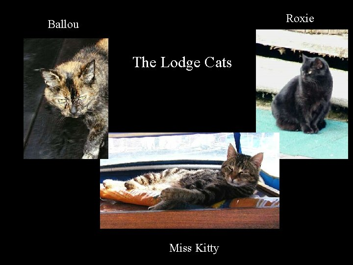 Roxie Ballou The Lodge Cats Miss Kitty