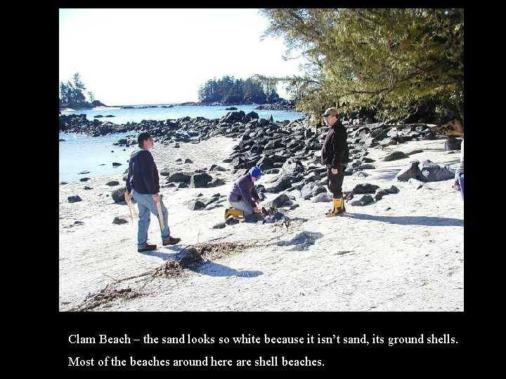 Clam Beach – the sand looks so white because it isn't sand, its ground