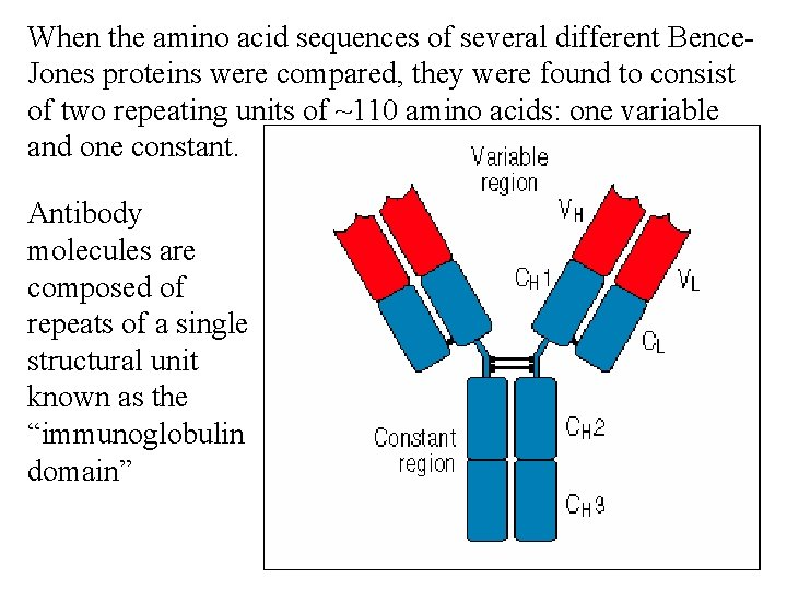 When the amino acid sequences of several different Bence. Jones proteins were compared, they