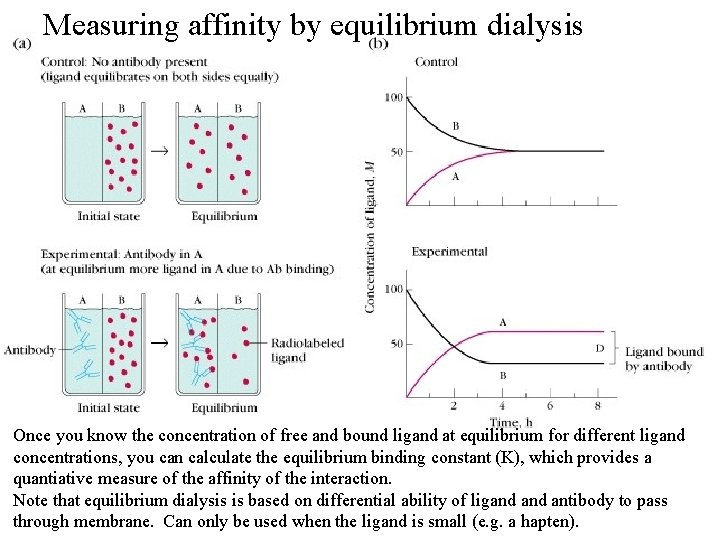 Measuring affinity by equilibrium dialysis Once you know the concentration of free and bound