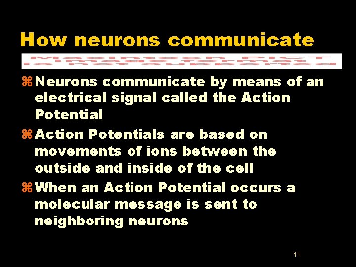 How neurons communicate z Neurons communicate by means of an electrical signal called the