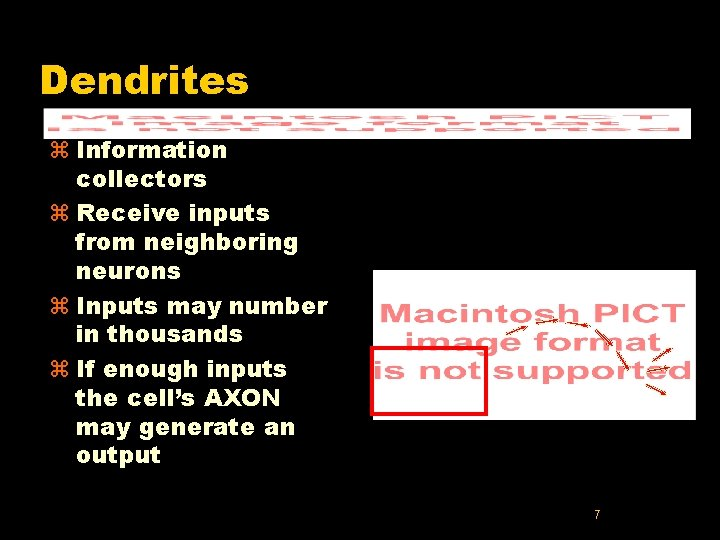 Dendrites z Information collectors z Receive inputs from neighboring neurons z Inputs may number