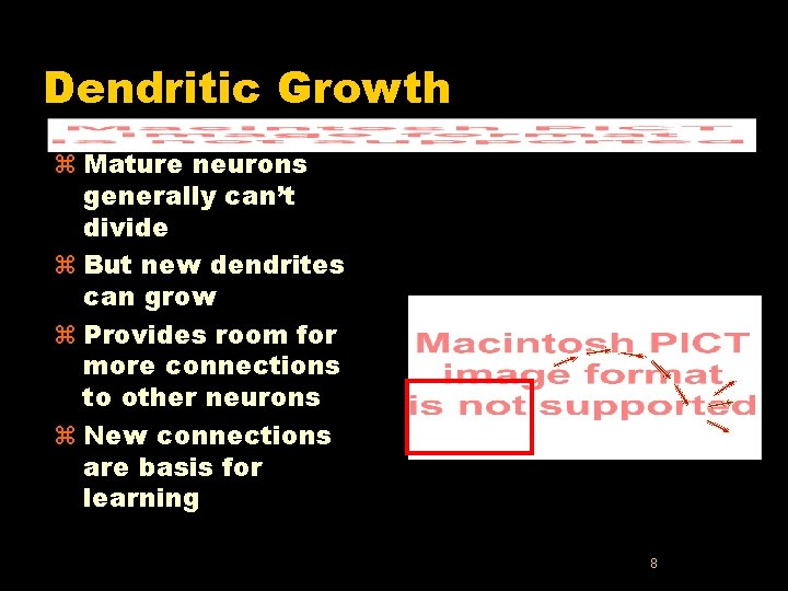 Dendritic Growth z Mature neurons generally can't divide z But new dendrites can grow