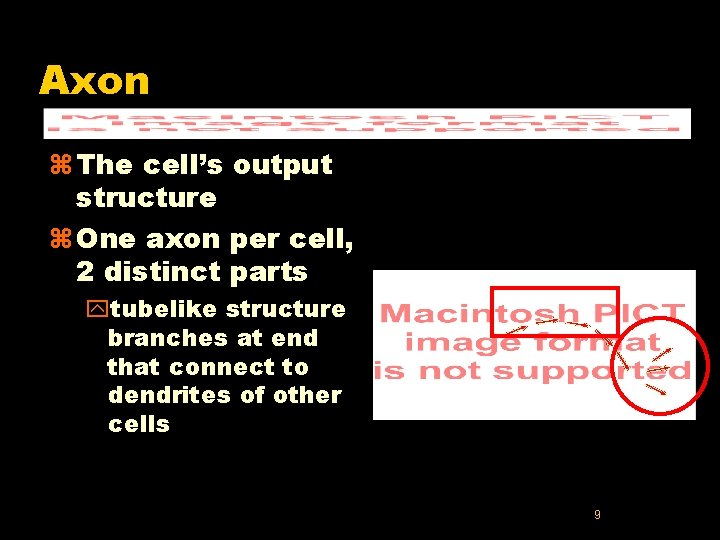 Axon z The cell's output structure z One axon per cell, 2 distinct parts