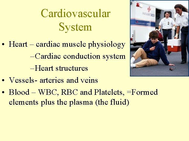 Cardiovascular System • Heart – cardiac muscle physiology – Cardiac conduction system – Heart