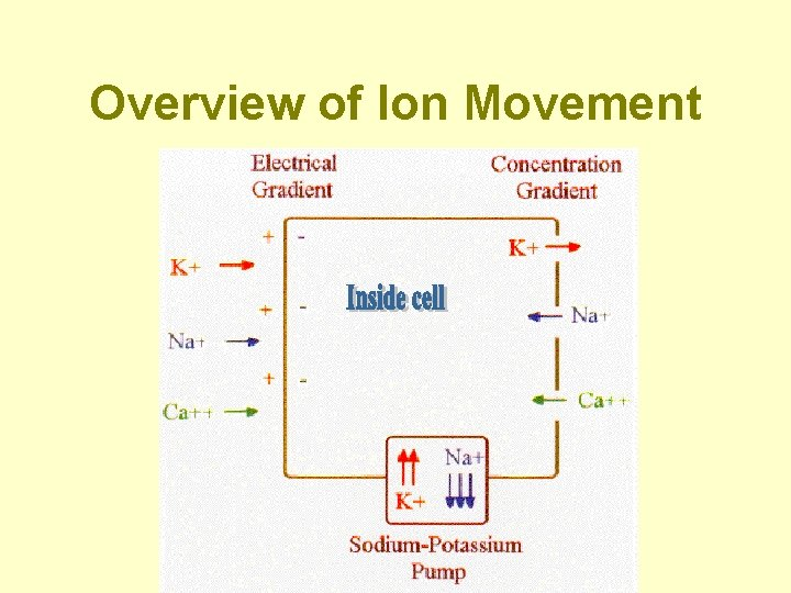 Overview of Ion Movement
