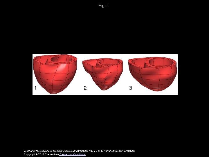 Fig. 1 Journal of Molecular and Cellular Cardiology 2016 9693 -100 DOI: (10. 1016/j.
