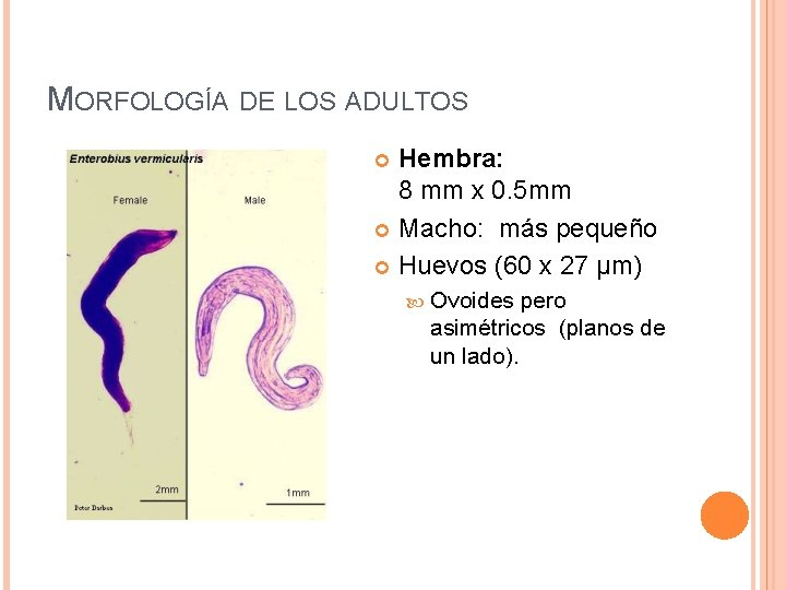 virus del papiloma berrugas hpv nedir erkek