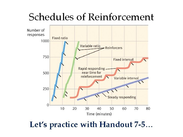 Schedules of Reinforcement Let's practice with Handout 7 -5…