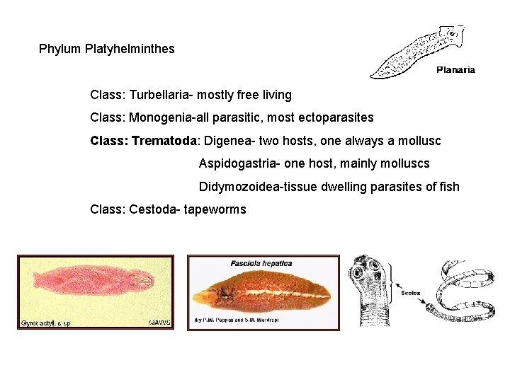 tratamentul papilomului pe uger