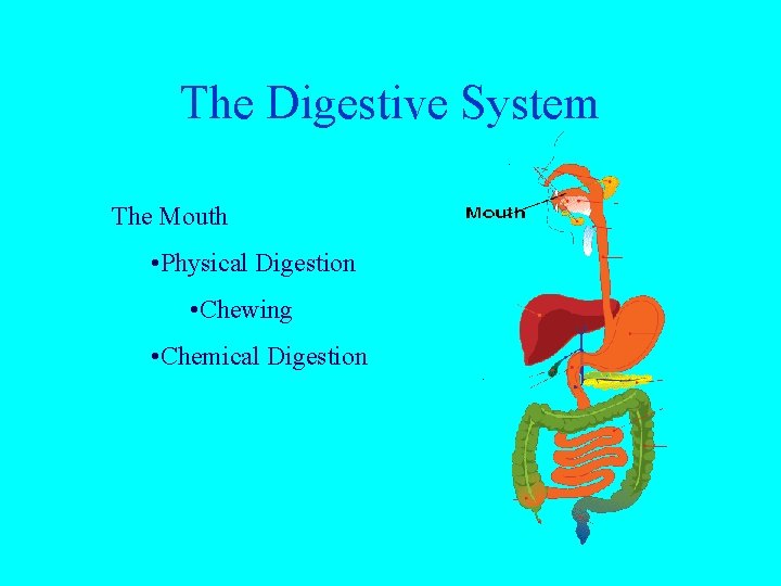 The Digestive System The Mouth • Physical Digestion • Chewing • Chemical Digestion