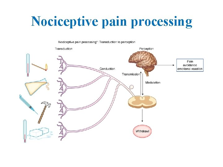 Nociceptive pain processing