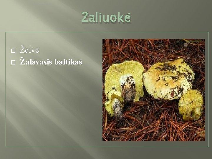 Žaliuokė Želvė Žalsvasis baltikas