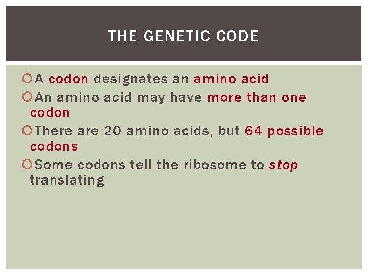 THE GENETIC CODE A codon designates an amino acid An amino acid may have