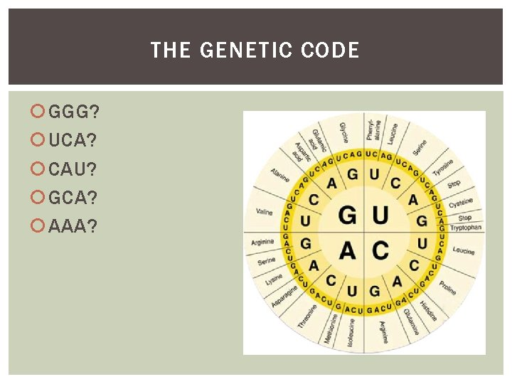 THE GENETIC CODE GGG? UCA? CAU? GCA? AAA?