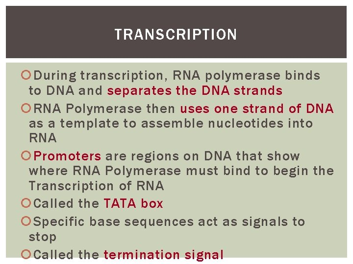 TRANSCRIPTION During transcription, RNA polymerase binds to DNA and separates the DNA strands RNA